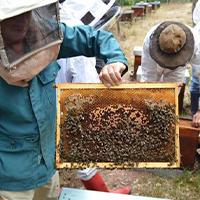 Le rucher de l'école ofermier