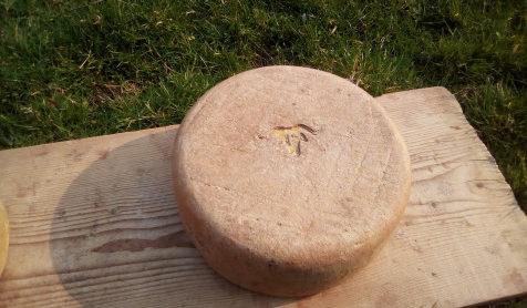 Tomme entière de fromage Ossau-Iraty AOP posé sur une planche de bois