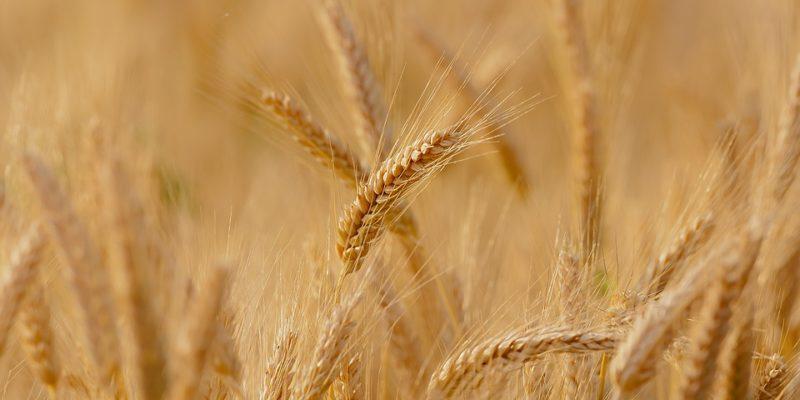 labels alimentaires o fermier paris batignolles